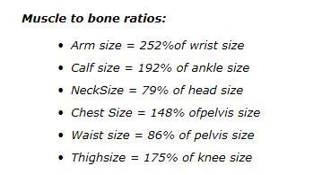 ideal body measurements based on wrist measurements
